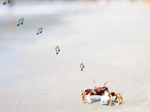 crab on beach with musical notes
